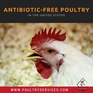 The United States Is Trending Toward Antibiotic-Free Poultry - http://www.poultryservices.com/blog/the-u-s-is-trending-toward-antibiotic-free-poultry#sthash.FwPpxOA6.dpbs