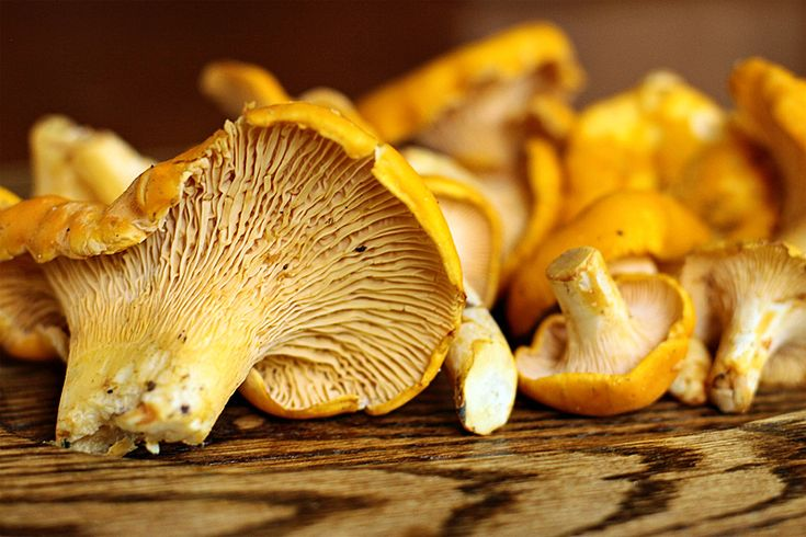chanterelle mushrooms |   Saute these mushrooms in butter and brandy.  They can be served with anything.  A mouthwatering treat.  But fresh ones can only be had in late summer and fall.  They are the best.