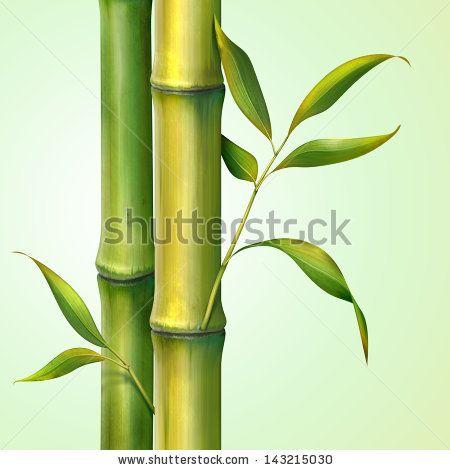 Bamboo Illustration Stock Photos, Bamboo Illustration Stock Photography, Bamboo…