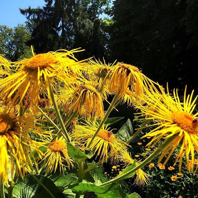 Grosseralant Im Botanischengarten In Munster Garten Pflanzen Gartentechnik Gartenarbeit Gartengestaltung Pflanzen