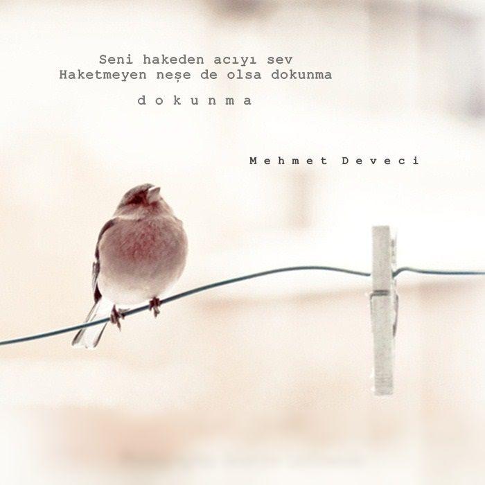 Seni hakeden acıyı sev. Haketmeyen neşe de olsa dokunma, dokunma. - Mehmet Deveci#sözler #anlamlısözler #güzelsözler #manalısözler #özlüsözler #alıntı #alıntılar #alıntıdır #alıntısözler #şiir #edebiyat