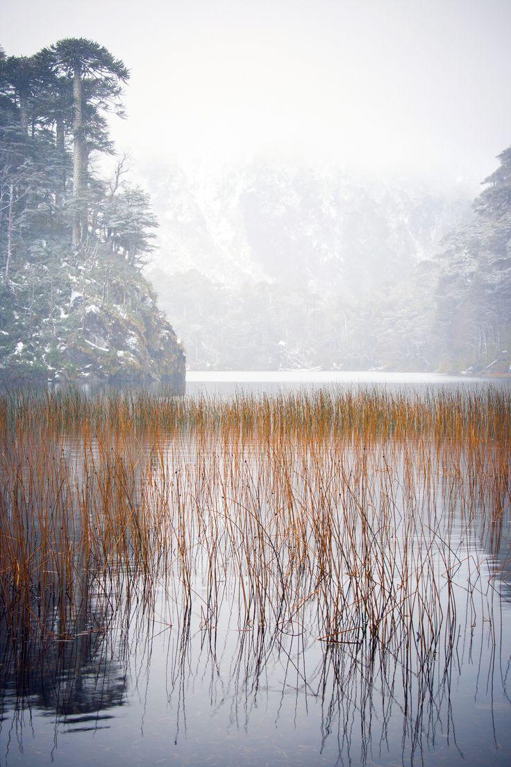 https://flic.kr/p/g6totQ   LAGO EL TORO   Parque Nacional Huerquehue
