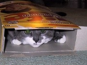 you'll never find me
