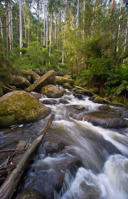 Torongo River West Gippsland | Flickr - Photo Sharing!