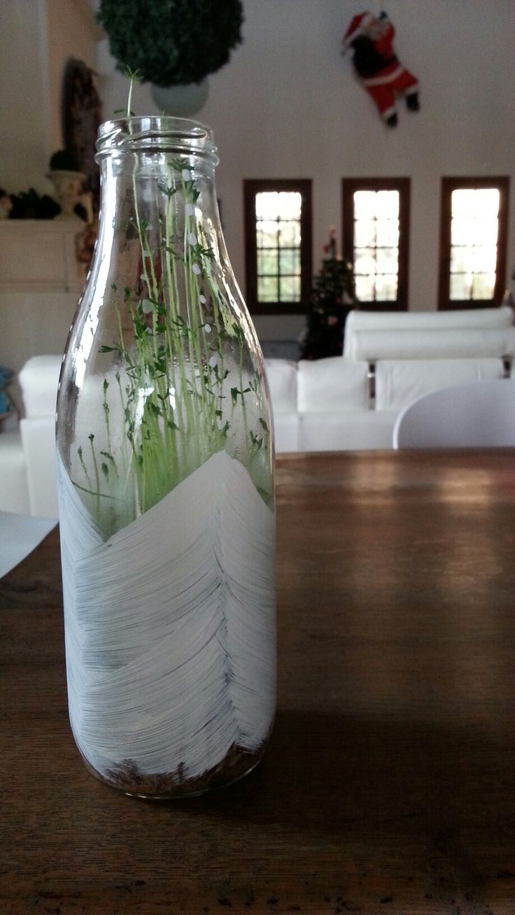 Faire pousser des lentilles dans une bouteille en verre