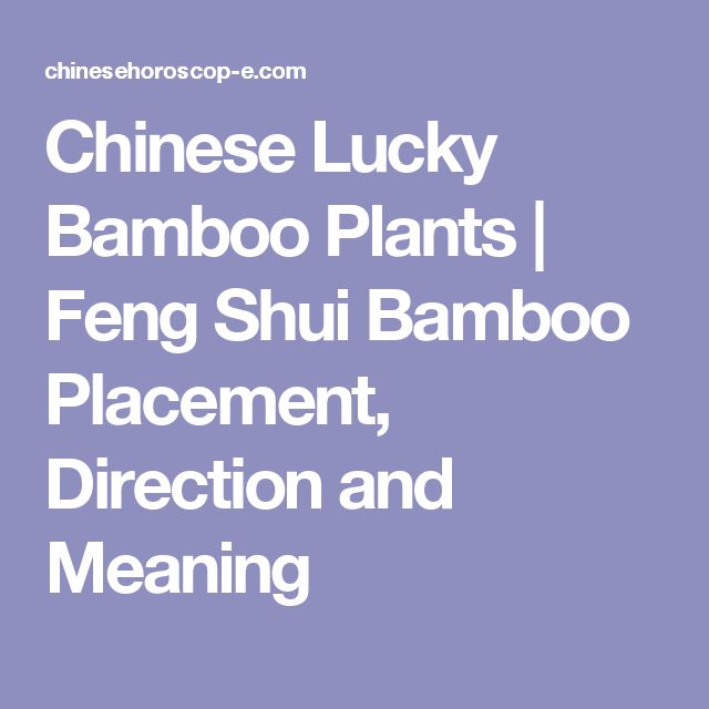 25 best ideas about chinese bamboo plant on pinterest - Lucky indoor plants feng shui ...