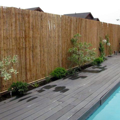 COLIGÜE (chusquea culeou), colihue, quila o bambu americano ~ GUADUA - http://www.bamboobiz.cl/images/home/IMG_6355.JPG