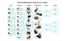 Картинки по запросу царство животных