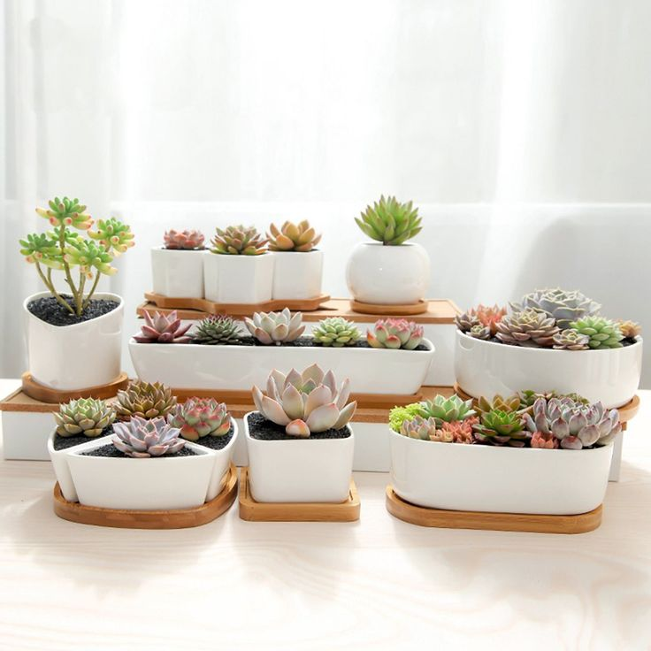Best 25 succulent pots ideas on pinterest succulent Cactus pots for sale