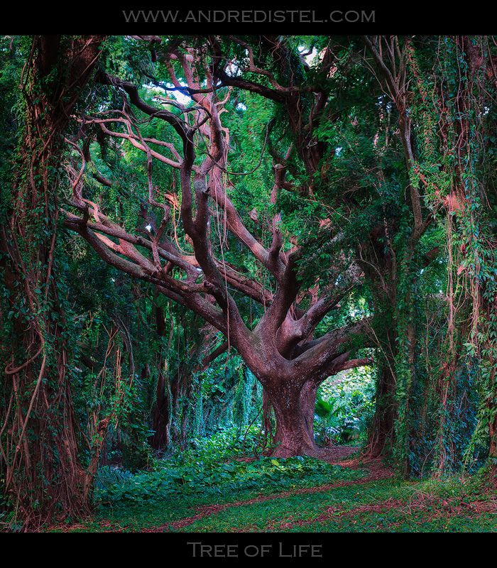 Tree of Life - Maui, HI, USA