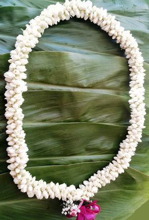This elegant triple strand woven pikake lei is made from small pearl like pikake flowers and possesses a wonderfully sweet scent. The small delicate pikake flowers are strung together in strands and then woven to make a large thicker lei resembling strands of pearls twisted together. A favorite flower among Hawaiian Princesses, the pikake lei is widely used as the traditional wedding lei in for the bride.