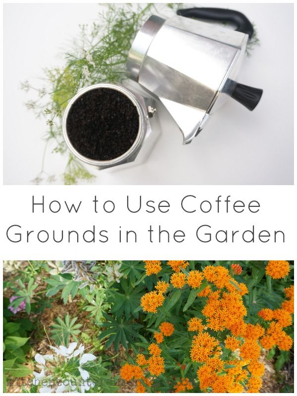 How to use coffee grounds in the garden - We've found 3 awesome ways to put used coffee grounds to work in the garden.