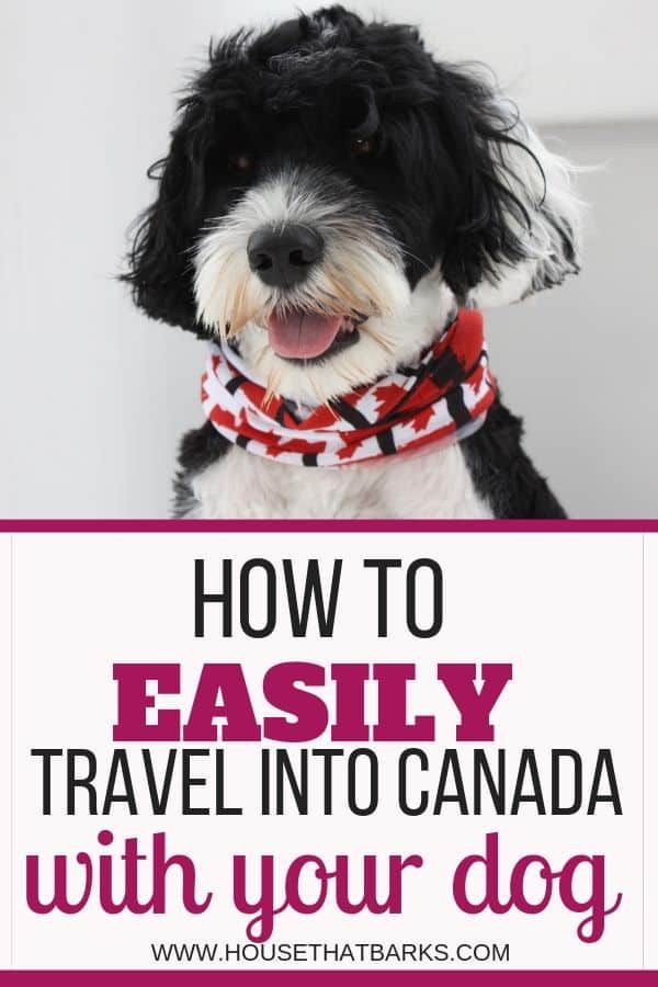9 Best Tips For Traveling To Canada With A Dog Dog Travel Dogs Canada Travel