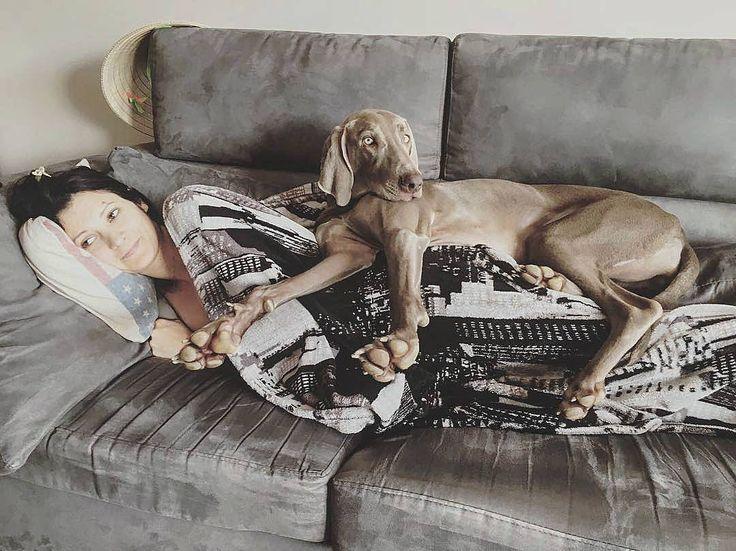 Va bene che in inverno fa freddo e bisogna coprirsi ma sfruttare il proprio amico mi sembra un maltrattamento  (per il padrone)  Foto di: @neverjoys #BauSocial  #cane #dog #doglovers #instadog #bracco #divano #sofa #love #italia #milano #cold #coperta #inverno #winter #dogoftheday #dogstagram #dogofinstagram #doggo #doge #friends