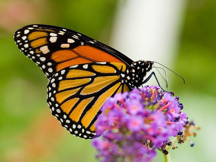 La lezione della farfalla (da leggere...)