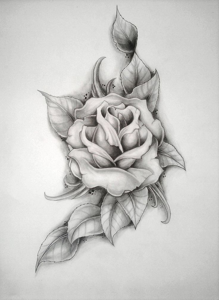 rose (Mercyy's birthday) by ritubimbi on deviantART