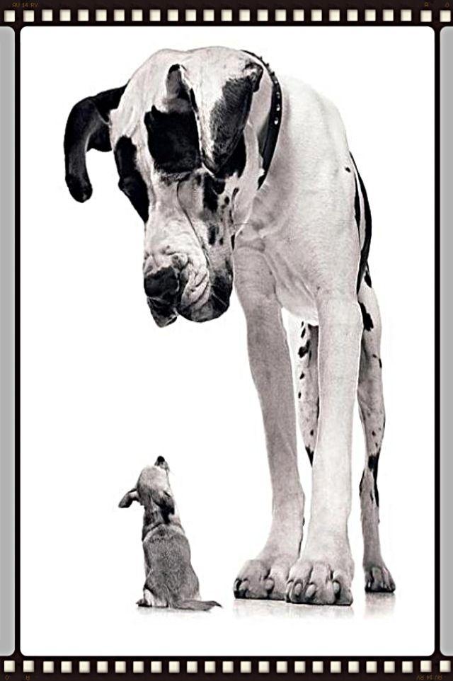 A Grate Dane And A Little Puppy Ausgestopftes Tier Babyhunde