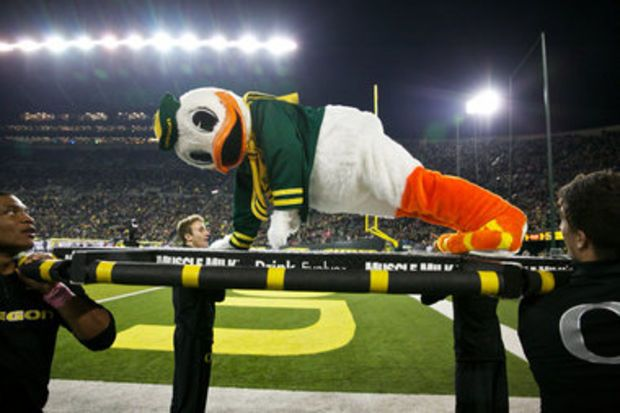 Oregon Ducks tradition, push-ups every time the Oregon Ducks score.  TOTAL PUSH-UPS FOR PUDDLES: 2011:  2,790 2012:  2,932 2013:  2,516
