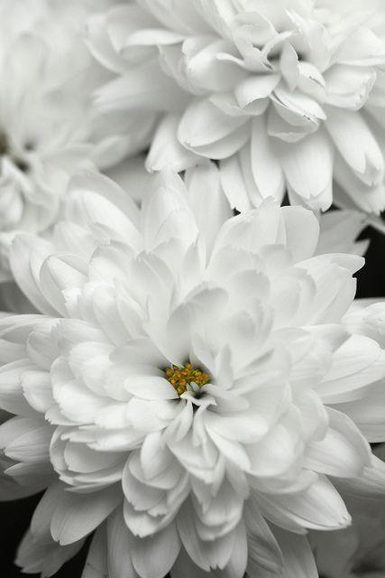 pure white~
