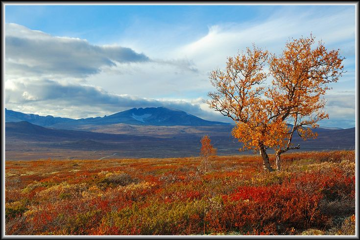 fjell | Autumn on Dovrefjell, a photo from Oppland, South | TrekEarth