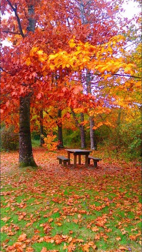 Otoño en el bosque de Orgi, #Navarra -> http://www.turismo.navarra.es/esp/organice-viaje/recurso/Patrimonio/3058/Bosque-de-Orgi.htm