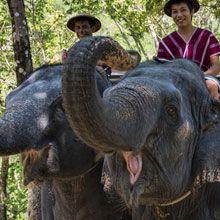 Vogue Eyewear Official Website -  - A WALK WITH ELEPHANTS Lovely!!
