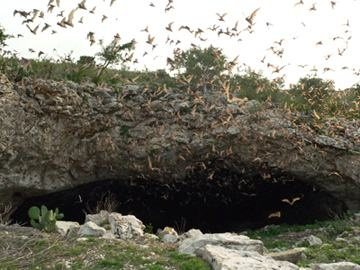 Frio bat cave in Texas Hill Country