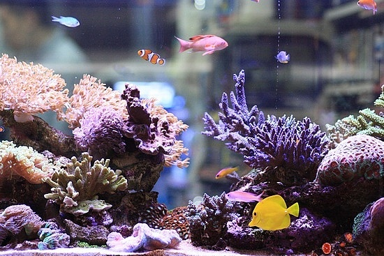 See more in the All Things Aquaria board: https://www.pinterest.com/JibinAbraham/all-things-aquaria/ coral reef tank