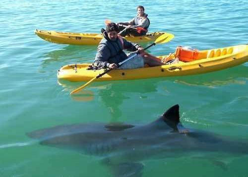 Close encounter with shark from a kayak it 39 s a skiff for Kayak fishing tips