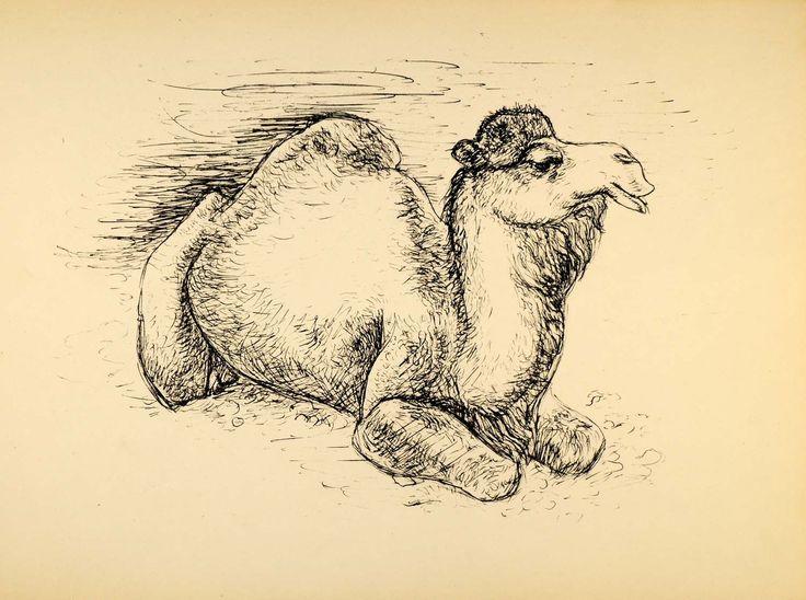 1944 Print Pen Sketch Wildlife Art Camel Ernst Denzler ORIGINAL HISTORIC ZMT1