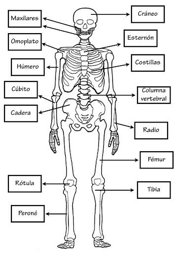 imagenes del cuerpo humano