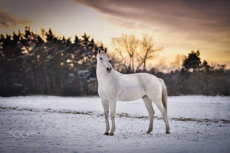 Winter horse - null