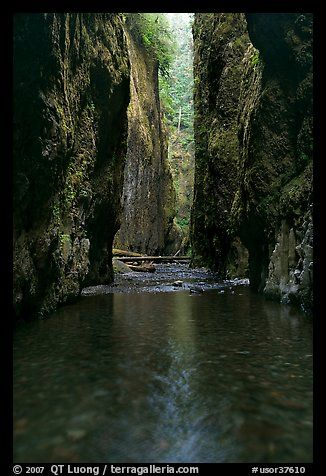 Stream and slot-like canyon walls, Oneonta Gorge. Columbia River Gorge, Oregon, USA