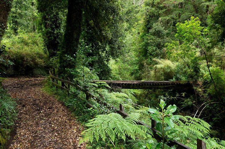 Fotografía de Parque Futangue  Sur de Chile.