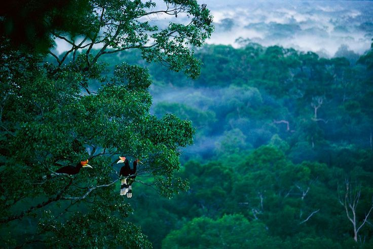Borneo Rainforest, Kalimantan | The world's oldest rainforest (130 million years) has new species discovered almost every month.