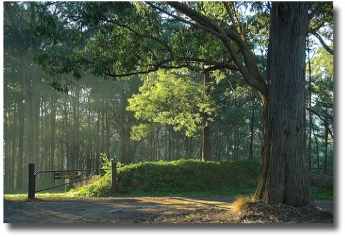 Sassafras forest on a winter's day in Melbourne - Australia compliments of http://www.flickr.com/photos/ubg43/537753066/