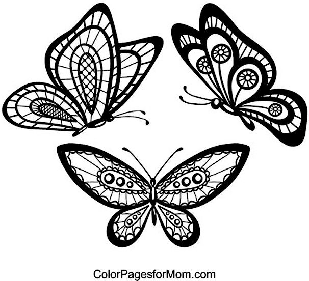 Butterfly Coloring Page 28