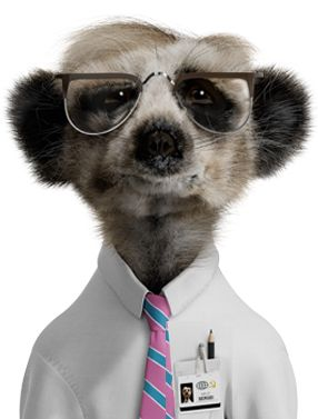 Sergei - Compare the Meerkat