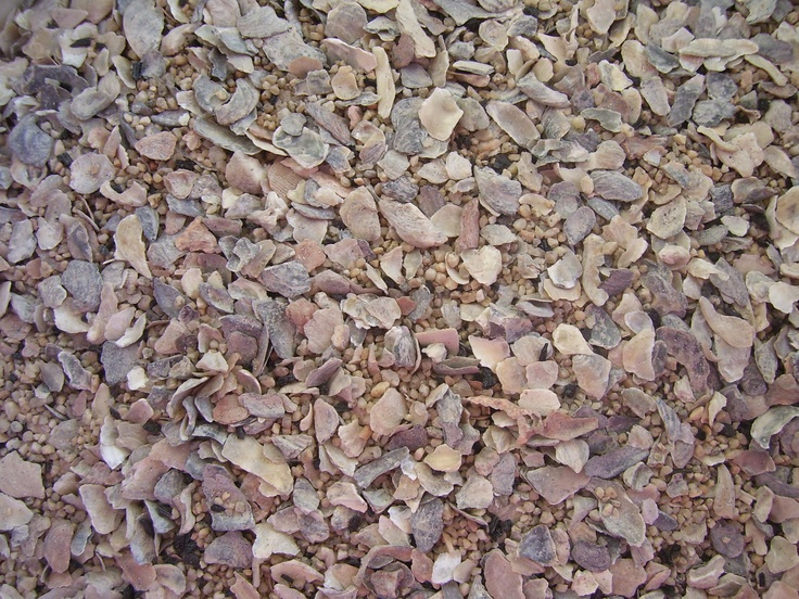 Buy crushed oyster shells 28 images top 28 where can for Crushed oyster shells for landscaping