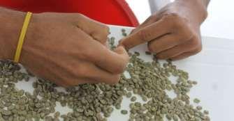 Durante mayo aumentó 74% el registro de exportadores de café