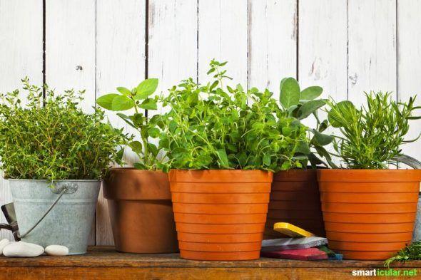 die besten 25 zimmerpflanzen schattig ideen auf pinterest. Black Bedroom Furniture Sets. Home Design Ideas