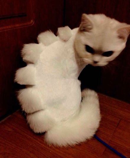 If shaving your cat, turn them into a cat-asurous... because you want your cat to kill you in your sleep?