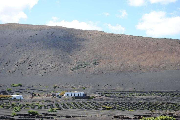 Volcanic ash landscape in Lanzarote