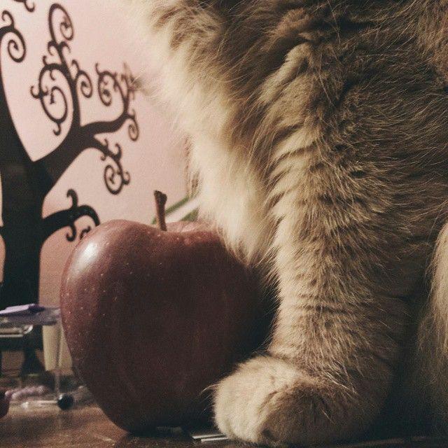 «Qui siamo tutti matti. Io sono matto. Tu sei matta.» «Come lo sai che sono matta?» disse Alice. «Per forza,» disse il Gatto: «altrimenti non saresti venuta qui.»