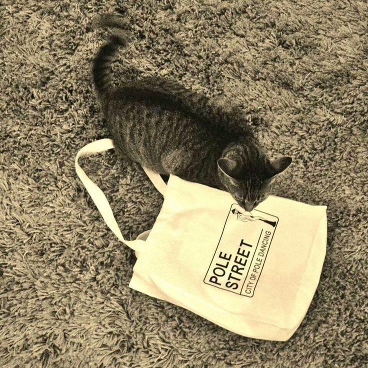 Our Duff and his pst tote!!!!