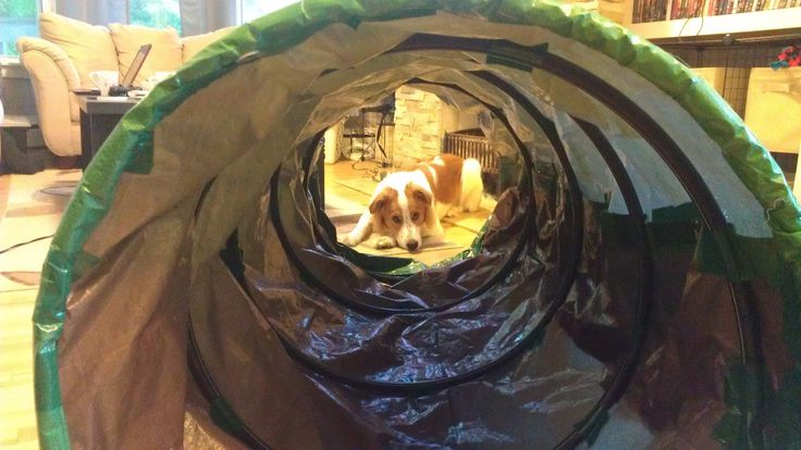 We were finally introduced to some of the agility equipment in our final two foundations classes, and Kobi's lack of confidence became inc...