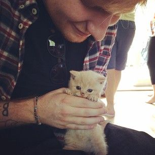 He somehow makes this kitten look even more angelic just by holding her. | Ed Sheeran Is The Cat Lover You Should Aspire To Be