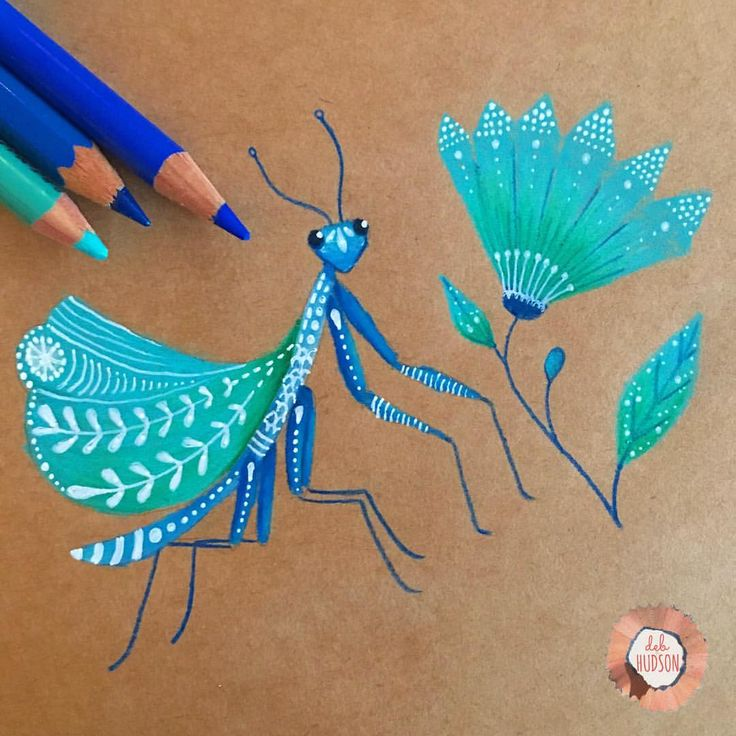 "Coloured pencil drawing, praying mantis  1,193 Likes, 19 Comments - DEB HUDSON (@debi_hudson) on Instagram: ""Praying Mantis 58 /100 of #the100dayproject #100daysofcolouredpencilbydeb #debhudson…"""
