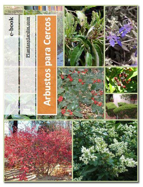 Las 25 mejores ideas sobre plantas para cercos en - Arbustos para jardin ...