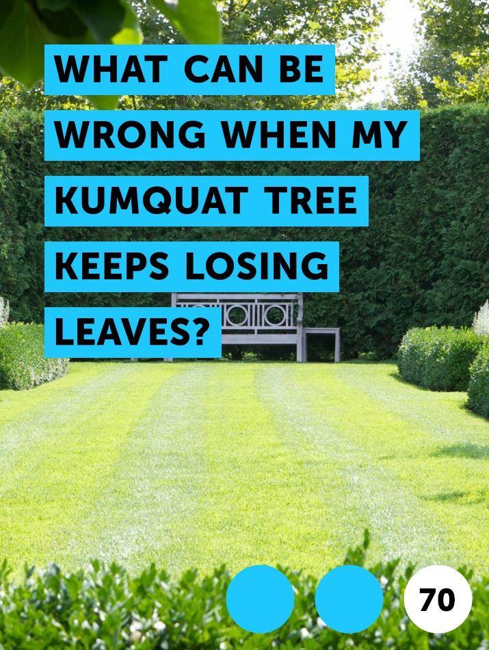 Vulnerability Tree Losing Leaves By Quabbin Reservoir Ma